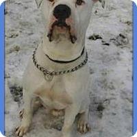 Adopt A Pet :: Bruin - Sterling, MA