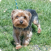 Adopt A Pet :: JASPER - Coudersport, PA