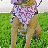 Adopt A Pet :: Chica URGENT - Sacramento, CA