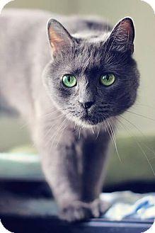 Domestic Shorthair Cat for adoption in Markham, Ontario - Heidi