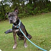Adopt A Pet :: Lady - Brookhaven, NY
