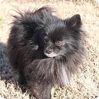 Adopt A Pet :: Joey - Salem, NH