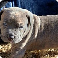 Adopt A Pet :: Ely - Alpharetta, GA