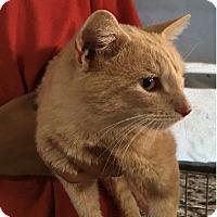 Adopt A Pet :: Patrick - Ravenna, TX