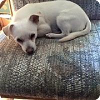 Adopt A Pet :: Tuffy - Seattle, WA