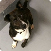 Adopt A Pet :: PACO - Lexington, TN