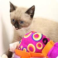 Adopt A Pet :: Oshkosh - Murfreesboro, NC