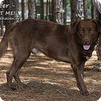 Adopt A Pet :: Kiefer Brown - Minneola, FL