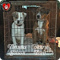 Adopt A Pet :: Henry Ford - Joliet, IL