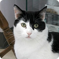Adopt A Pet :: Carnation - Warwick, RI