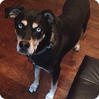 Adopt A Pet :: Foster Home for Frankie - Warrenton, MO