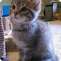 Adopt A Pet :: Apollo - Newport, KY