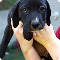 Adopt A Pet :: Bailey - Newark, DE