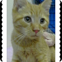 Adopt A Pet :: Johnson - Trevose, PA