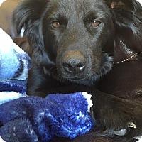 Adopt A Pet :: Brooklyn - Fargo, ND