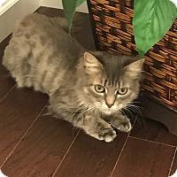 Adopt A Pet :: Zeppoli - Reinholds, PA