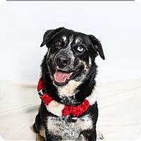 Adopt A Pet :: Harley - San Luis Obispo, CA