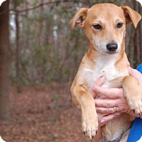 Adopt A Pet :: Ike - Elmsford, NY