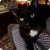 Adopt A Pet :: STAR - Beverly, MA