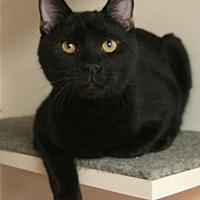 Adopt A Pet :: Luigi - Albuquerque, NM