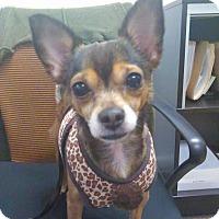 Adopt A Pet :: TOBY!! - Mastic Beach, NY