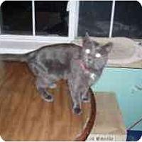 Adopt A Pet :: Winona - Hamburg, NY