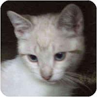 Adopt A Pet :: Angel eyes - Davis, CA