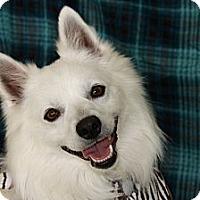 Adopt A Pet :: Niko - Princeton, KY