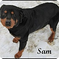 Adopt A Pet :: Sam - Darlington, MD