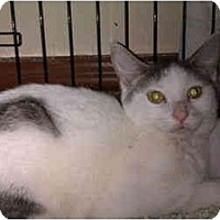 Adopt A Pet :: Paige (DG) - Little Falls, NJ