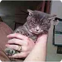 Adopt A Pet :: Teddy - Delmont, PA