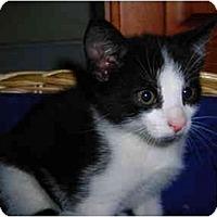 Adopt A Pet :: Cooper - Riverside, RI