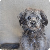 Adopt A Pet :: Rizzo - Los Angeles, CA