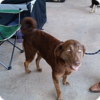 Adopt A Pet :: Sophie - in CT - Manchester, CT