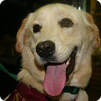 Adopt A Pet :: Vic - BIRMINGHAM, AL