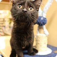 Adopt A Pet :: Happy - Greensboro, GA
