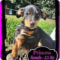 Adopt A Pet :: Princess meet me 11/14 - East Hartford, CT