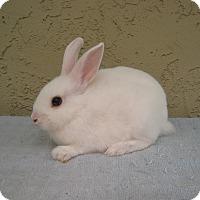 Adopt A Pet :: Tubs - Bonita, CA