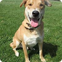 Adopt A Pet :: KOSER - New Cumberland, WV