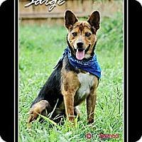 Adopt A Pet :: Sarge - Delaware, OH
