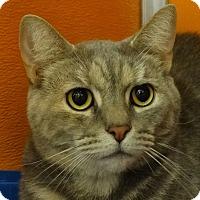 Adopt A Pet :: Puffy - Elyria, OH