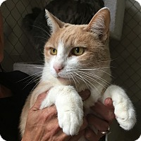 Adopt A Pet :: Stella - Fallbrook, CA