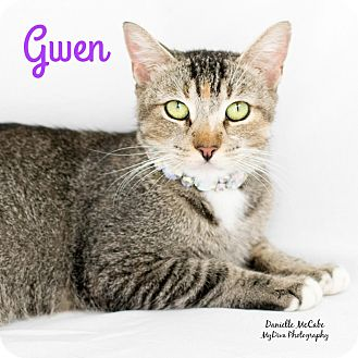 Domestic Shorthair Cat for adoption in Canyon Country, California - Gwen