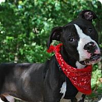 Adopt A Pet :: Dimitri - New Castle, PA