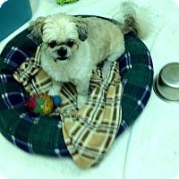 Adopt A Pet :: Gismo - Tavares, FL