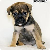 Adopt A Pet :: Friedrich - Shamokin, PA