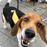 Adopt A Pet :: Sol - San Francisco, CA