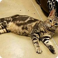 Adopt A Pet :: Valero - Hesperia, CA