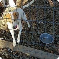 Adopt A Pet :: Deacon - Powder Springs, GA