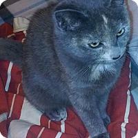 Adopt A Pet :: Brandi - Alexis, NC